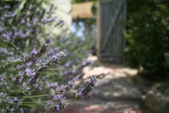 Chambres d'Hotes Garden